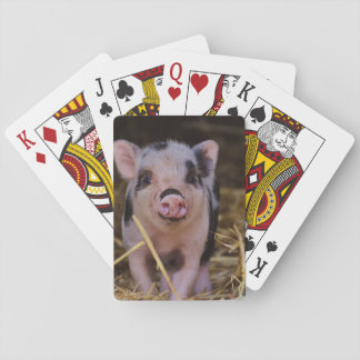 Sweet Cute Pig Playing Cards