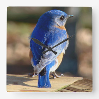 Sweet Eastern Bluebird Square Wall Clock