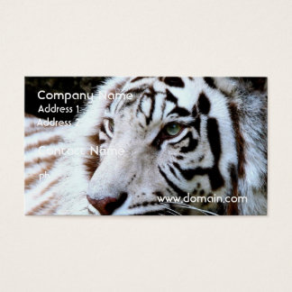 Sweet Faced White Tiger Business Card