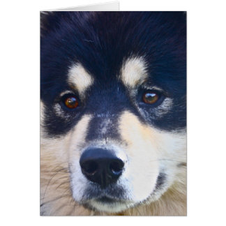Sweet Finnish Lapphund Greeting Card