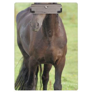 Sweet Friesian Horse Clipboard