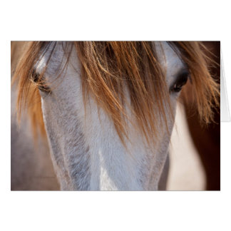 Sweet Ginger Horse photo note card