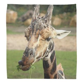 sweet giraffe. bandana