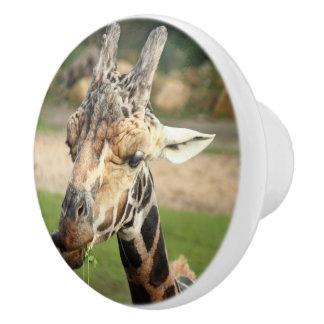 sweet giraffe. ceramic knob