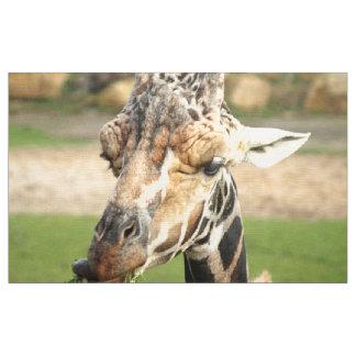 sweet giraffe. fabric