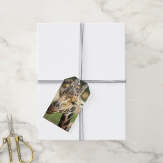 sweet giraffe. pack of gift tags