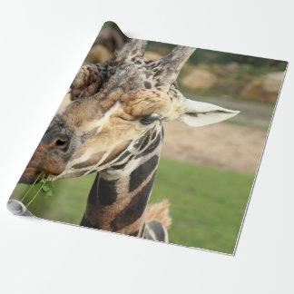 sweet giraffe. wrapping paper