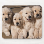 Sweet Golden Retriever Puppies Mouse Pads