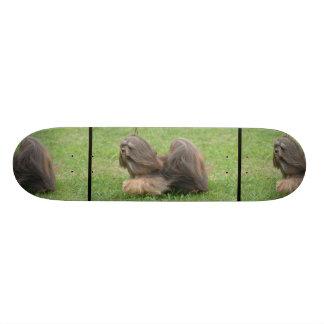 Sweet Havanese Dog Skateboard Decks