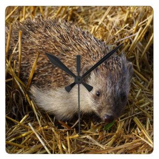 Sweet Hedgehog In Stubble Field Clocks