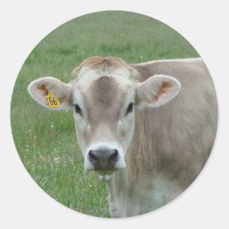 sweet jersey cow round sticker