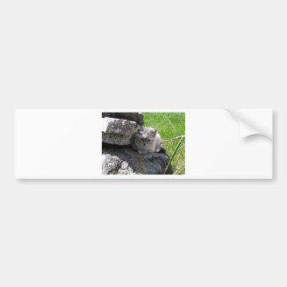 Sweet kitten focus bumper sticker