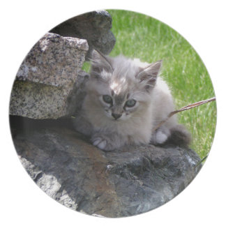 Sweet kitten focus plate