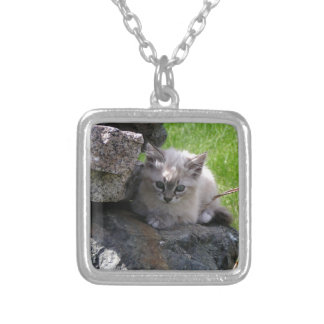 Sweet kitten focus silver plated necklace