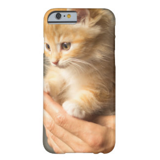 Sweet Kitten in Good Hand Barely There iPhone 6 Case