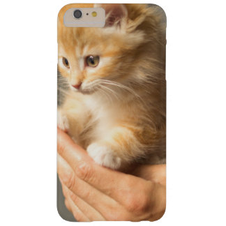 Sweet Kitten in Good Hand Barely There iPhone 6 Plus Case