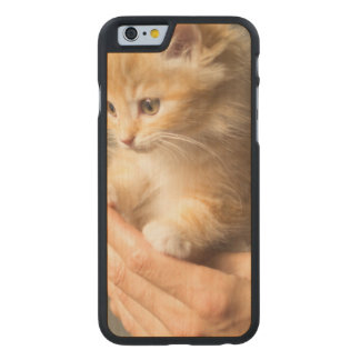 Sweet Kitten in Good Hand Carved Maple iPhone 6 Case