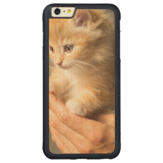 Sweet Kitten in Good Hand Carved Maple iPhone 6 Plus Bumper Case