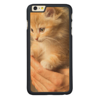 Sweet Kitten in Good Hand Carved Maple iPhone 6 Plus Case