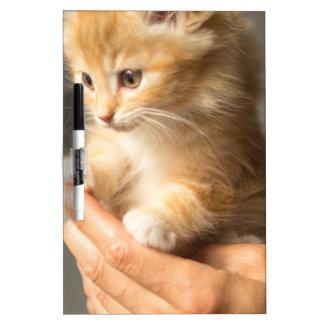 Sweet Kitten in good Hand Dry Erase Board