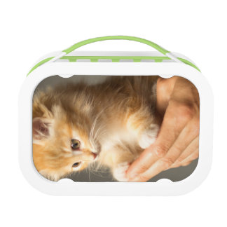 Sweet Kitten in Good Hand Lunch Box