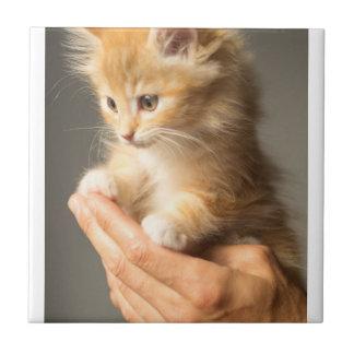 Sweet Kitten in Good Hand Tile