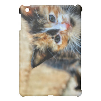 Sweet Kitten looking at YOU Case For The iPad Mini