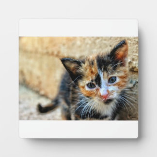 Sweet Kitten looking at YOU Plaque