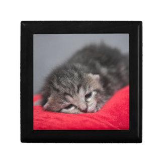 Sweet kitty keepsake box