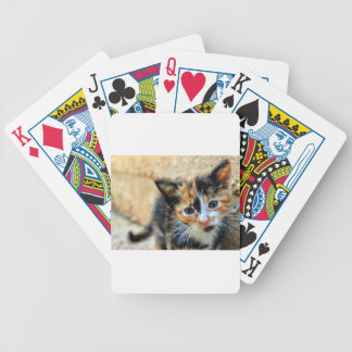 Sweet Kitty looking at YOU Poker Deck