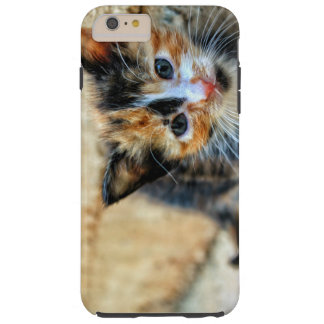 Sweet Kitty looking at YOU Tough iPhone 6 Plus Case