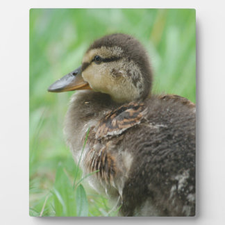 Sweet little duckling plaque