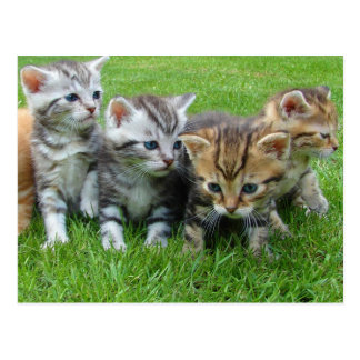Sweet little kittens postcard