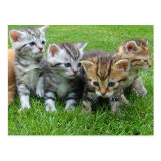 Sweet little kittens postcard