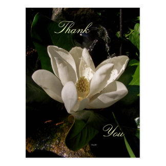 Sweet Magnolia Blossom Postcard