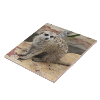 Sweet Meerkat Photo Tile