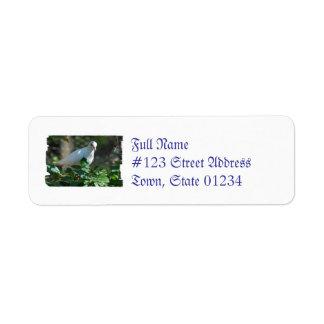 Sweet Mourning Dove Return Address Label