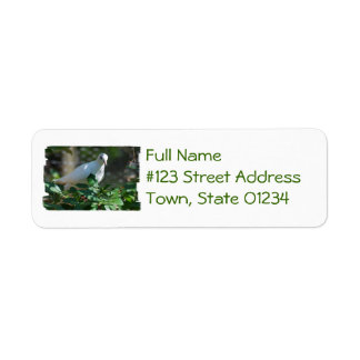 Sweet Mourning Dove Return Address Labels