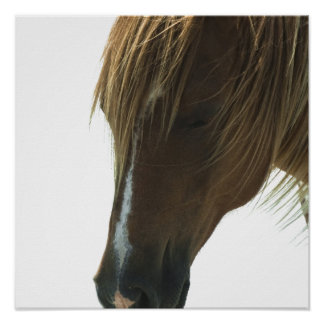 Sweet Mustang Horse Poster