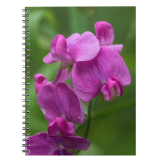Sweet Pea Pretty Pink Wildflowers Floral Notebook