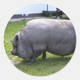 Sweet Piggy | Animal Farm Classic Round Sticker