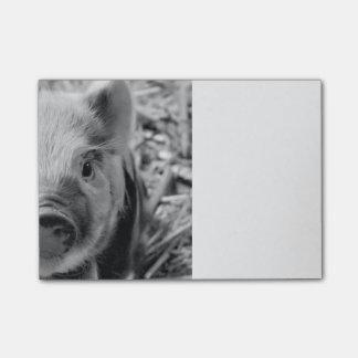 sweet piglet, black white post-it notes