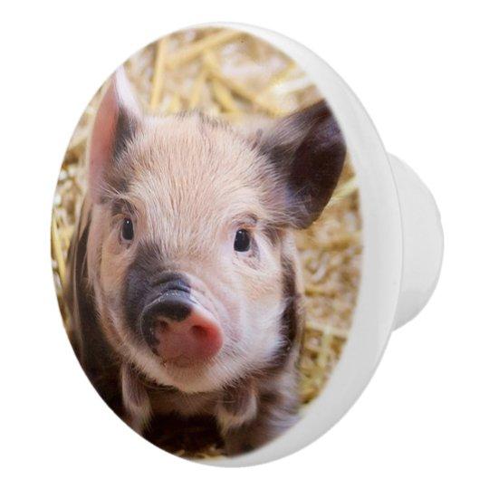 sweet piglet ceramic knob