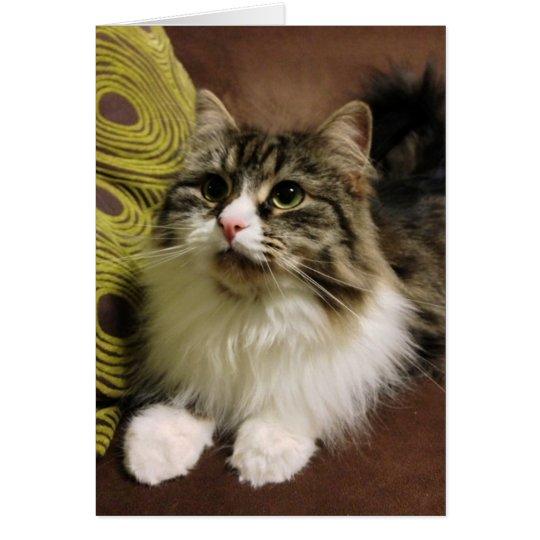 Sweet Portrait of a Siberian Cat Card