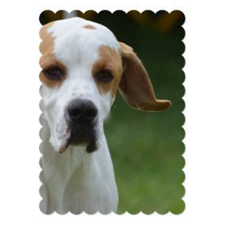 Sweet Portuguese Pointer Dog Cards