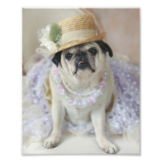 Sweet Pug in Straw Hat Print