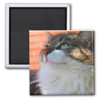 Sweet Ragdoll Cat Magnet