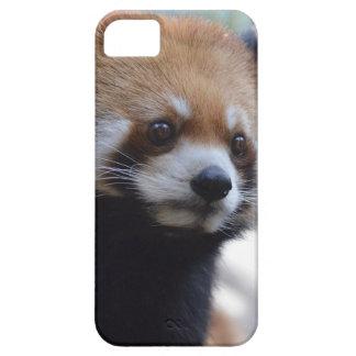 Sweet Red Panda Bear iPhone 5 Cover