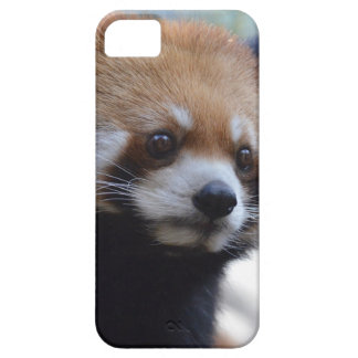 Sweet Red Panda Bear iPhone 5 Covers