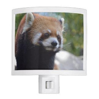 Sweet Red Panda Bear Night Lite